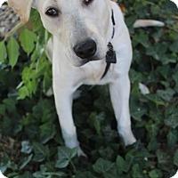 Adopt A Pet :: Trouble - Salt Lake City, UT