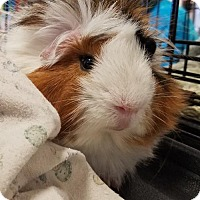Adopt A Pet :: Turbo - Kenosha, WI