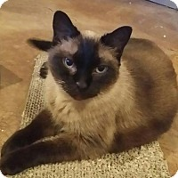 Adopt A Pet :: Indigo - Atlanta, GA
