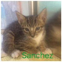 Adopt A Pet :: Sanchez - Satellite Beach, FL