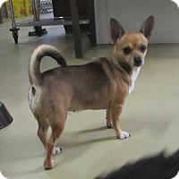 Adopt A Pet :: RASCAL - Jackson, MO