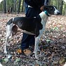 Adopt A Pet :: JS Turner Over