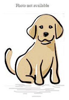 Labrador Retriever/Retriever (Unknown Type) Mix Dog for adoption in San Bernardino, California - URGENT ON 11/15 San Bernardino
