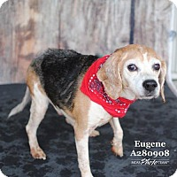 Adopt A Pet :: Eugene - Spring, TX