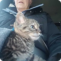 Adopt A Pet :: Ember II - Mackinaw, IL