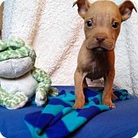 Adopt A Pet :: Alejandro - Newark, DE