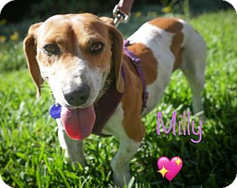 Dachshund Dog for adoption in Los Angeles, California - Milly