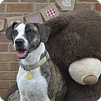 Adopt A Pet :: Sophia - Germantown, TN