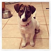 Adopt A Pet :: Mollie - Dayton, OH