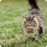 Adopt A Pet :: Nancy - St. Louis, MO