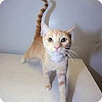 Adopt A Pet :: Jose Limon - New York, NY