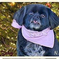 Adopt A Pet :: Baby mellow easy companion - Sacramento, CA