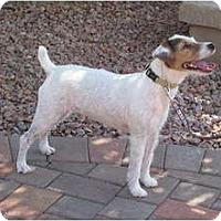 Adopt A Pet :: SONNY - Scottsdale, AZ