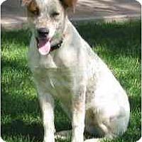 Adopt A Pet :: Liberty (aka Libby) - Phoenix, AZ