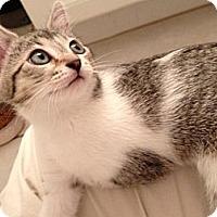 Adopt A Pet :: Corduroy - Vero Beach, FL
