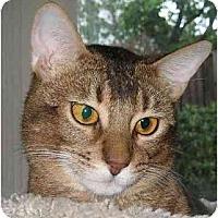 Adopt A Pet :: Jaggar - Davis, CA