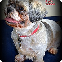 Adopt A Pet :: Chubby - Miami, FL