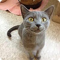 Adopt A Pet :: Tawny - Byron Center, MI