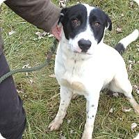 Adopt A Pet :: #499-14 @ Animal Shelter - Zanesville, OH