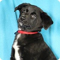 Adopt A Pet :: Ella - Minneapolis, MN
