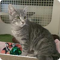 Adopt A Pet :: Pippen - Stafford, VA
