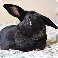 Adopt A Pet :: Loki Carrot Cake - Brooklyn, NY