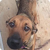Adopt A Pet :: Tess - Oak Ridge, NJ