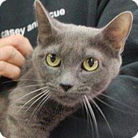 Adopt A Pet :: Kylie - Brooklyn, NY