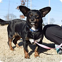Adopt A Pet :: Libby - Knoxville, TN