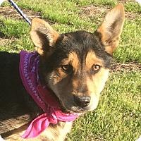 Adopt A Pet :: Lexie - Buffalo, NY