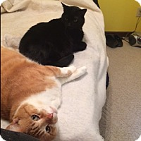 Adopt A Pet :: Tigger and Lil Buddy - Conyers, GA
