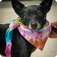 Adopt A Pet :: Lexie - Loudonville, NY