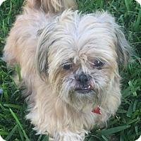 Adopt A Pet :: Teddy - Royal Palm Beach, FL