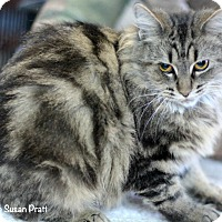 Adopt A Pet :: Amita - Bedford, VA