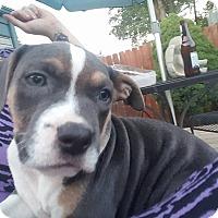 Adopt A Pet :: Sirloin-Adopted! - Detroit, MI