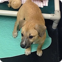 Adopt A Pet :: Summer - Barnwell, SC