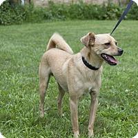 Adopt A Pet :: Kangaroo - Newtown, CT