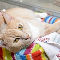 Adopt A Pet :: Emma - Whitehall, PA
