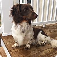 Adopt A Pet :: Bastian - Richmond, VA