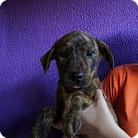 Adopt A Pet :: Deuce - Oviedo, FL