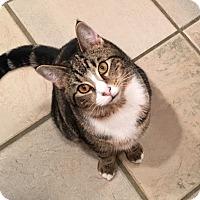 Adopt A Pet :: Cornell - Wayne, NJ