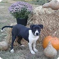 Adopt A Pet :: Odessa - Attalla, AL
