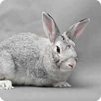 Adopt A Pet :: Silver Moon - Los Angeles, CA