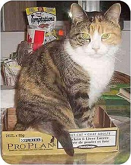 Calico Cat for adoption in Nepean, Ontario - KIKI
