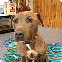 Adopt A Pet :: Jackson - Hopkinton, NH