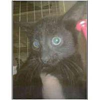 Adopt A Pet :: Spook - Owasso, OK