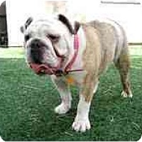 Adopt A Pet :: Jayda*adoption pending* - Gilbert, AZ