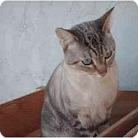 Adopt A Pet :: Mr. T - El Cajon, CA