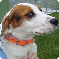 Adopt A Pet :: Piper - Grand Rapids, MI