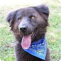 Adopt A Pet :: Smokey - Mocksville, NC